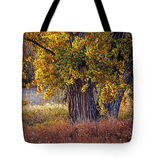 Cottonwood #6 Fountain Creek, Colorado In Fall Tote Bag by John Brink