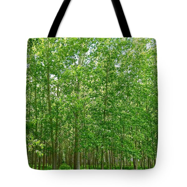 Cottonwood Oasis Tote Bag by Will Borden