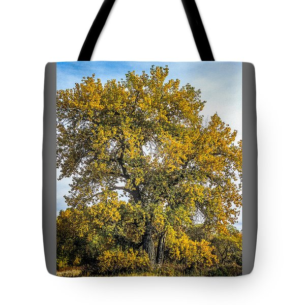 Cottonwood Tree # 12 In Fall Colors In Colorado Tote Bag by John Brink