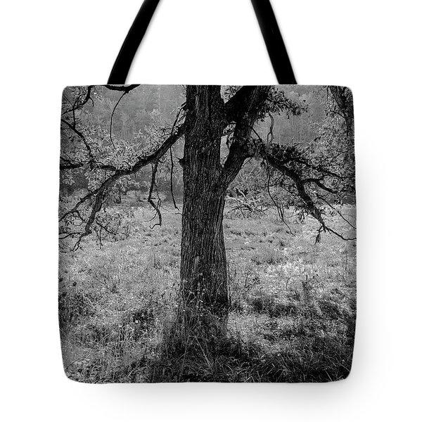 Coulee Oak Tote Bag