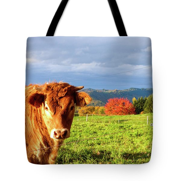 Cow And Autumn Colors  Tote Bag