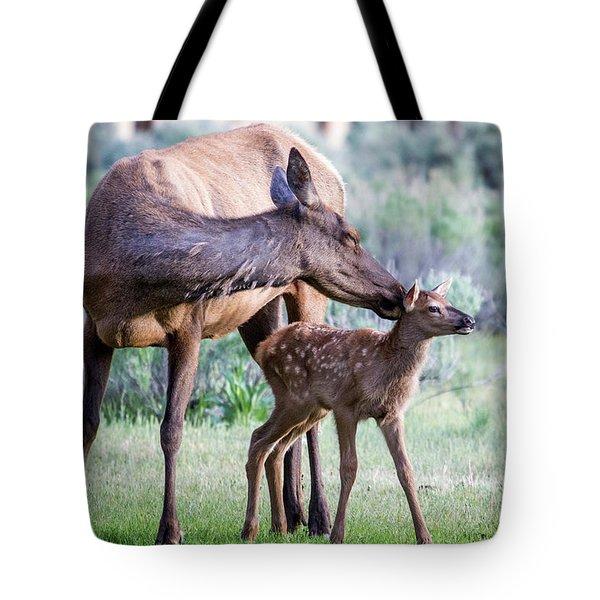 Cow And Calf Elk Tote Bag