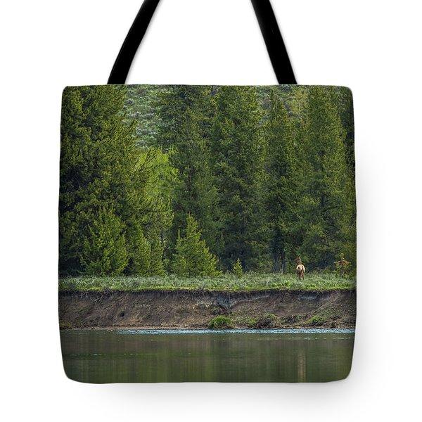 Cow Elk On The Riverbank Tote Bag