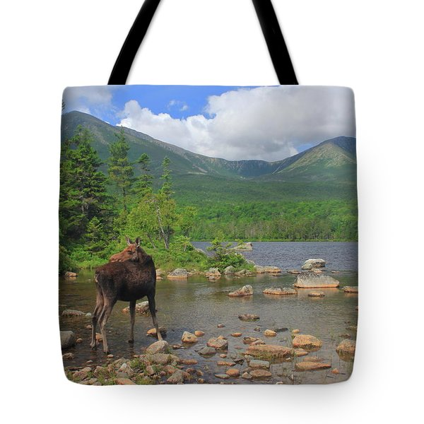 Cow Moose Looking Back At Sandy Stream Pond Tote Bag by John Burk