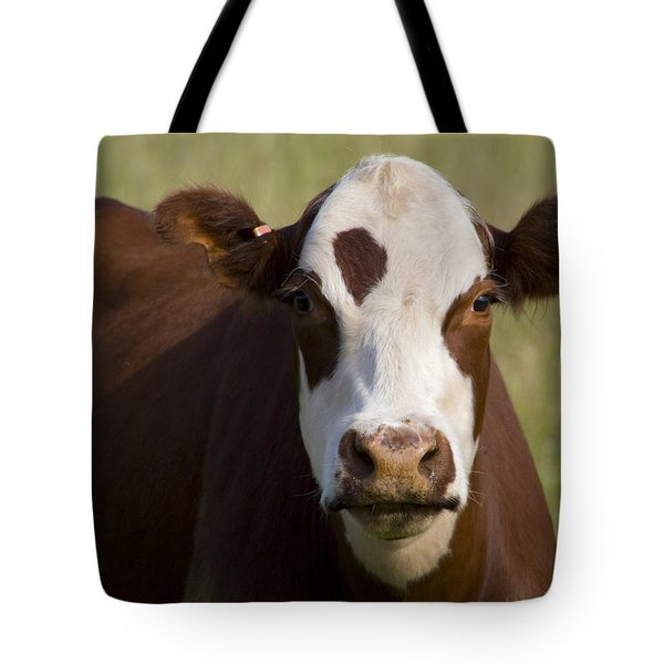 Tote Bag featuring the photograph Cow by Randy Bayne