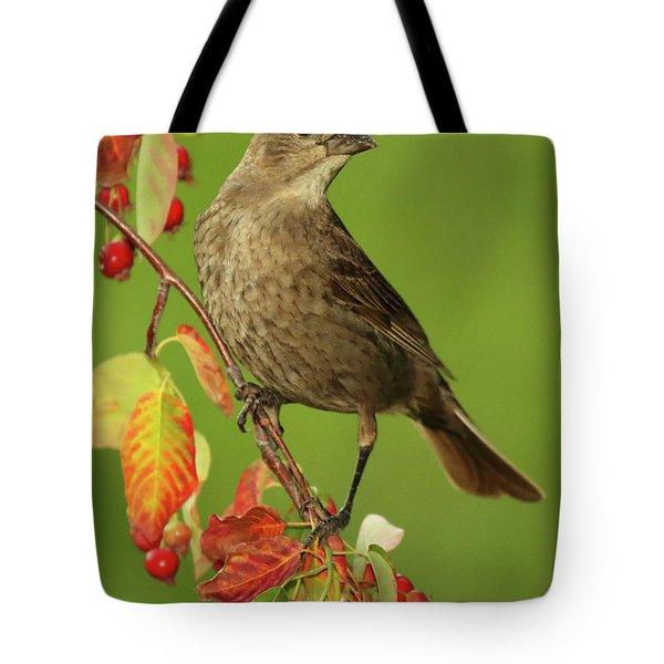 Cowbird Among Berries Tote Bag
