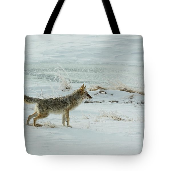Coyote - 8962 Tote Bag