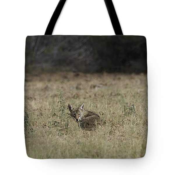 Coyote Tote Bag by Anne Rodkin