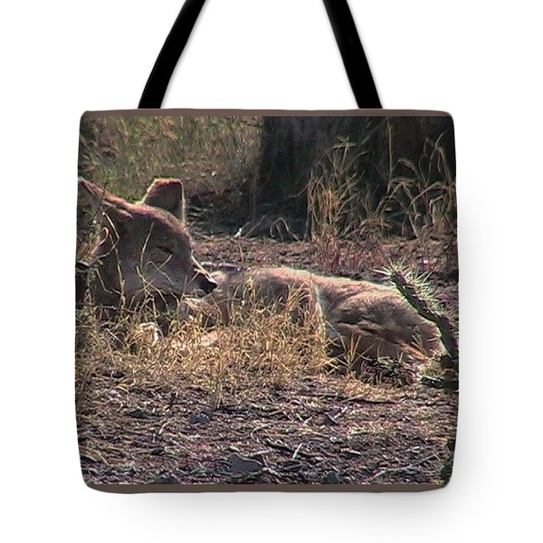 Resting Coyote Tote Bag