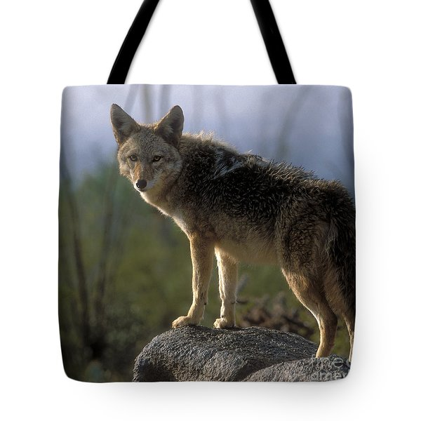 Coyote In Ocotillo Trees Tote Bag by Sandra Bronstein