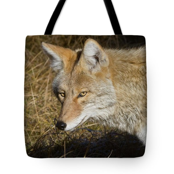Coyote In The Wild Tote Bag