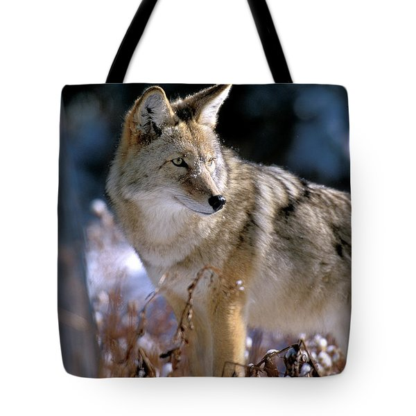 Coyote In Winter Light Tote Bag