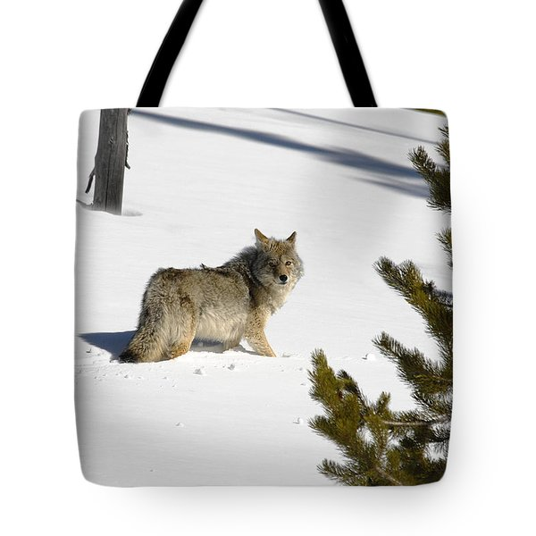 Coyote In Winter Tote Bag