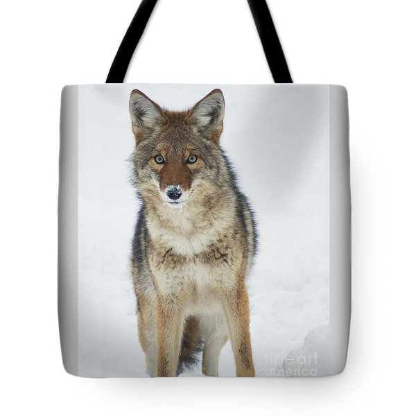 Coyote Looking At Me Tote Bag