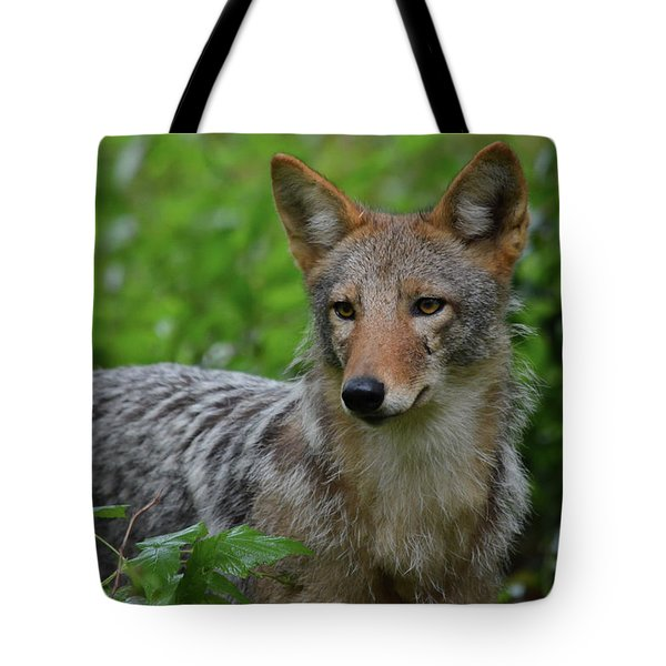 Coyote On The Prowl  Tote Bag