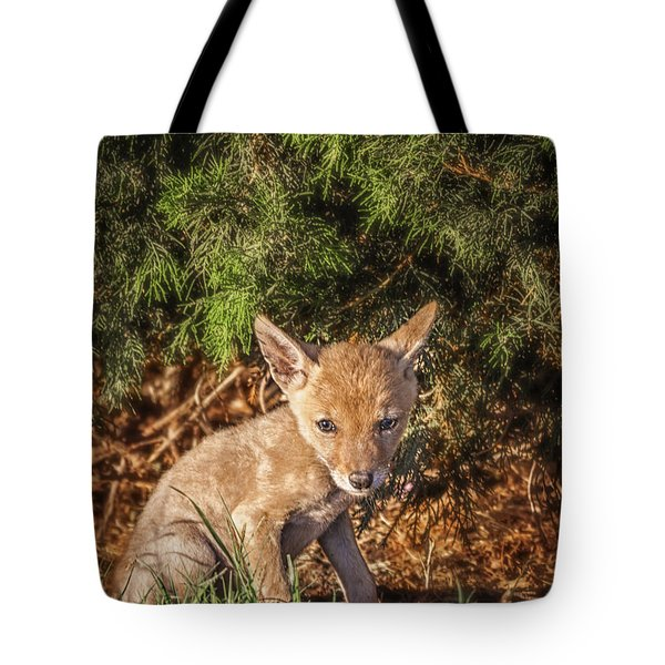 Coyote Pup Tote Bag