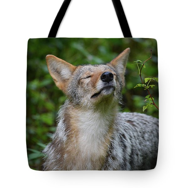 Coyote Soaking Up The Morning Sun Tote Bag