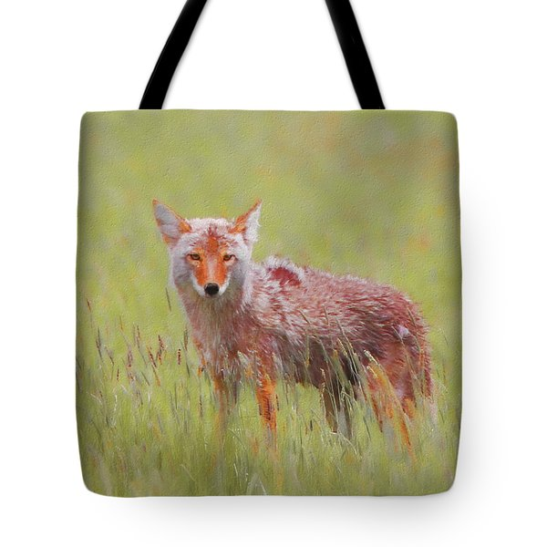 Coyote Stare Tote Bag
