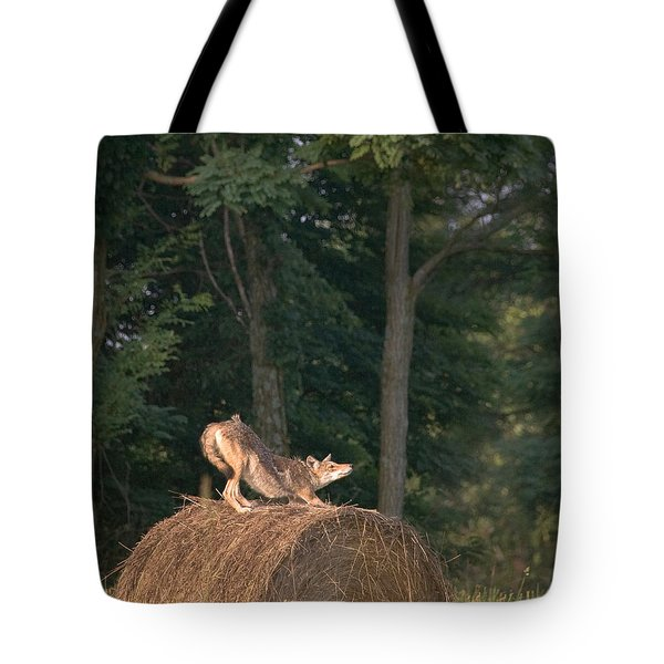 Coyote Stretching On Hay Bale Tote Bag