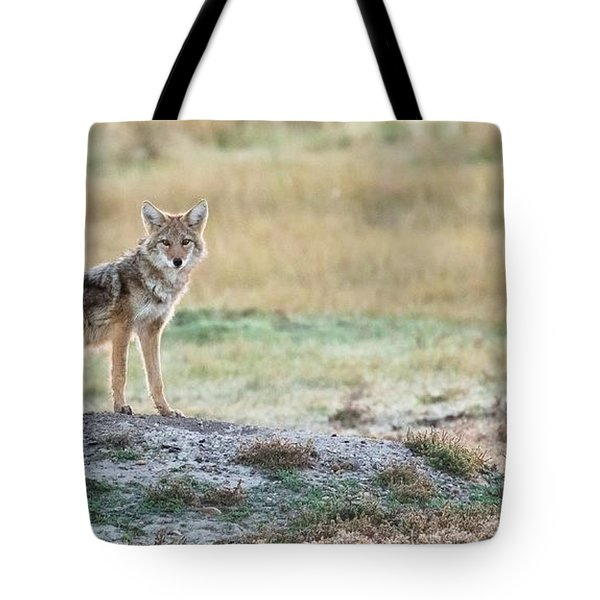 Coyotee Tote Bag by Kelly Marquardt