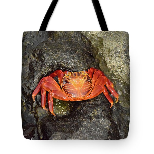 Crab Tote Bag by Will Burlingham