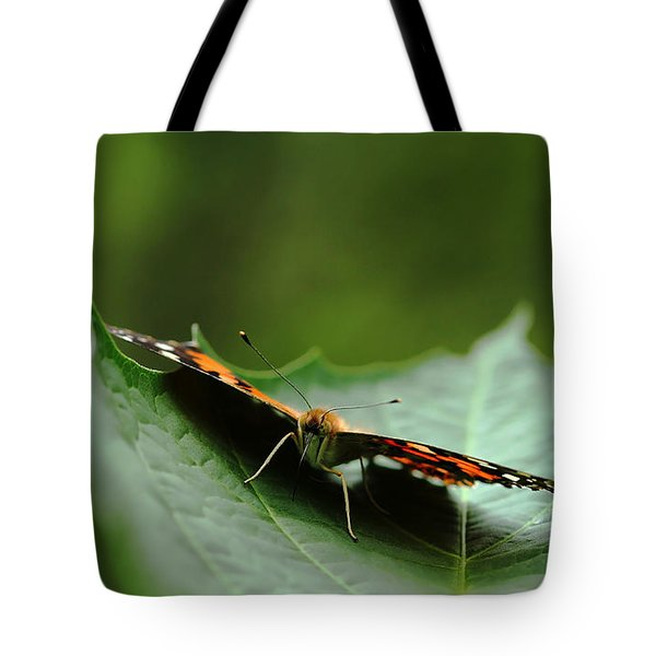 Tote Bag featuring the photograph Cradled Painted Lady by Debbie Oppermann