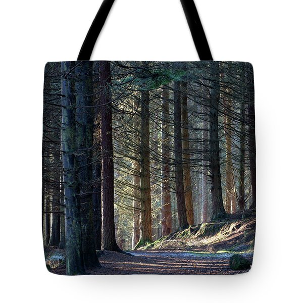 Tote Bag featuring the photograph Craig Dunain - Forest In Winter Light by Karen Van Der Zijden