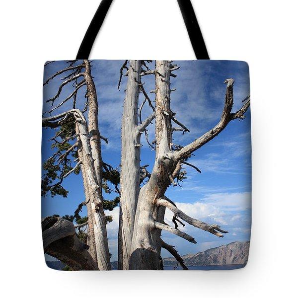 Crater Lake Tree Tote Bag by Carol Groenen