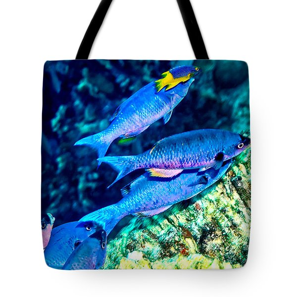 Tote Bag featuring the photograph Creole Wrasse And Little Spanish Hogfish by Perla Copernik