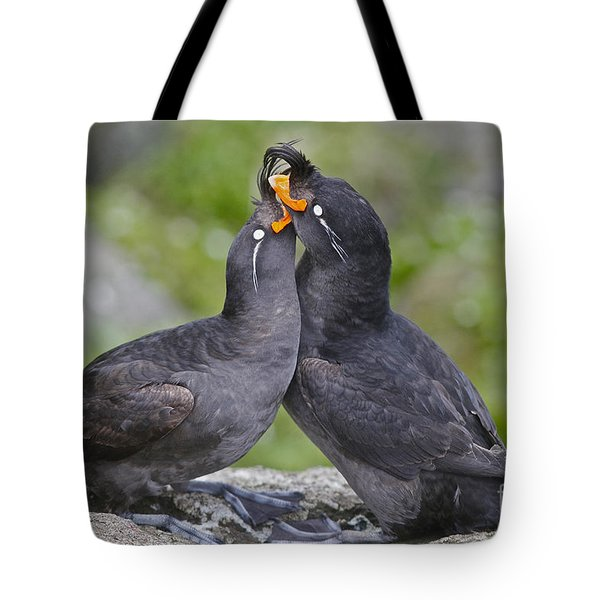 Crested Auklet Pair Tote Bag