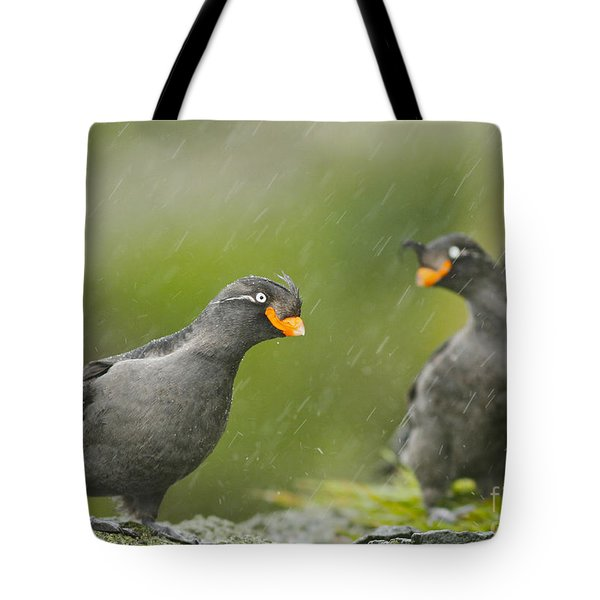 Crested Auklets Tote Bag