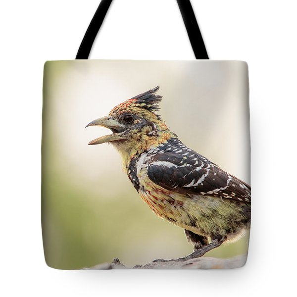 Tote Bag featuring the photograph Crested Barbet - Barbican Promepic - Trachyphonus Vaillantii by Nature and Wildlife Photography