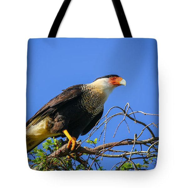 Crested Caracar Tote Bag