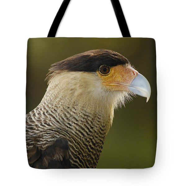 Crested Caracara Polyborus Plancus Tote Bag by Pete Oxford