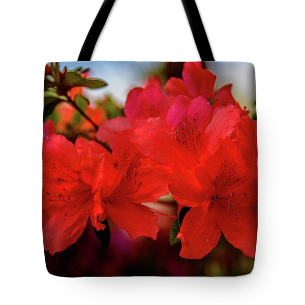 Crimson Lights Tote Bag