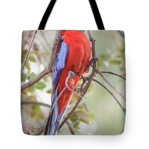 Crimson Rosella 01 Tote Bag