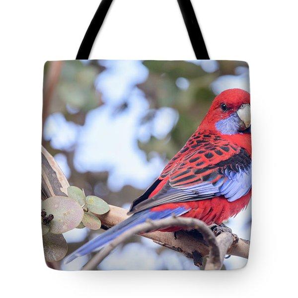 Crimson Rosella 03 Tote Bag