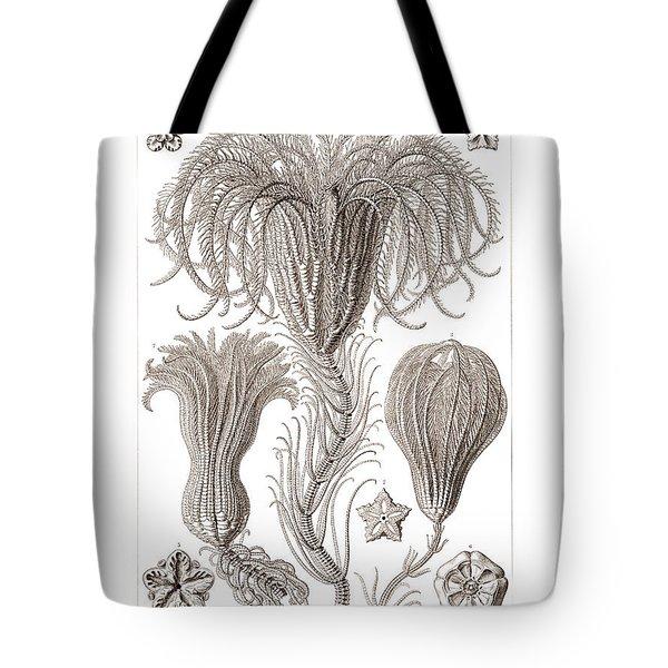 Crinoids Tote Bag