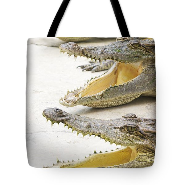Crocodile Choir Tote Bag