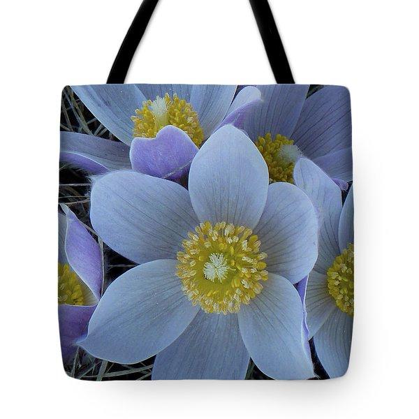 Crocus Blossoms Tote Bag