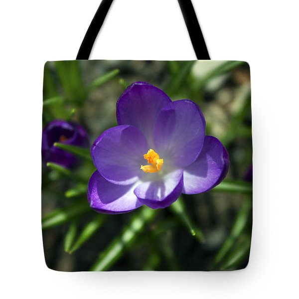Crocus In Bloom #1 Tote Bag by Jeff Severson