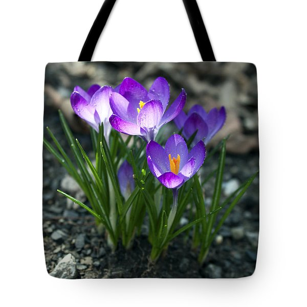 Crocus In Bloom #2 Tote Bag by Jeff Severson