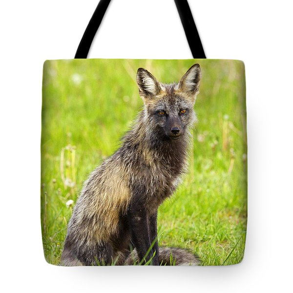 Tote Bag featuring the photograph Cross Fox by Aaron Whittemore