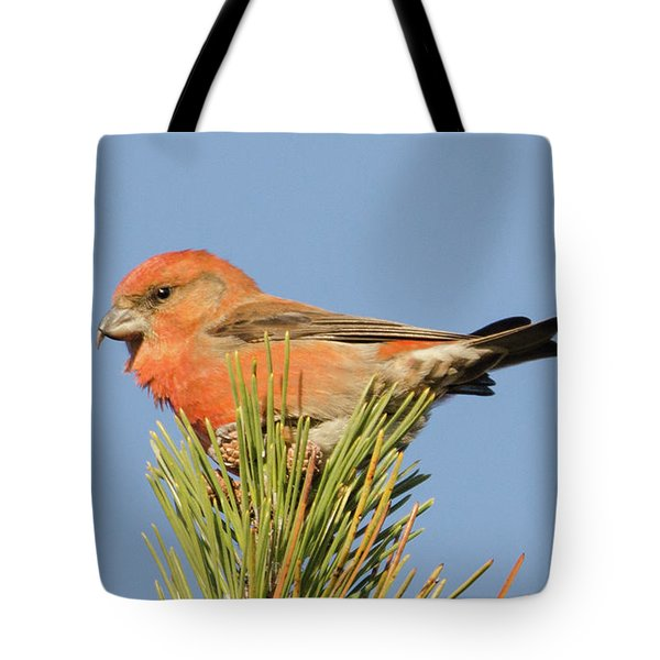 Crossbill Tote Bag by Judd Nathan