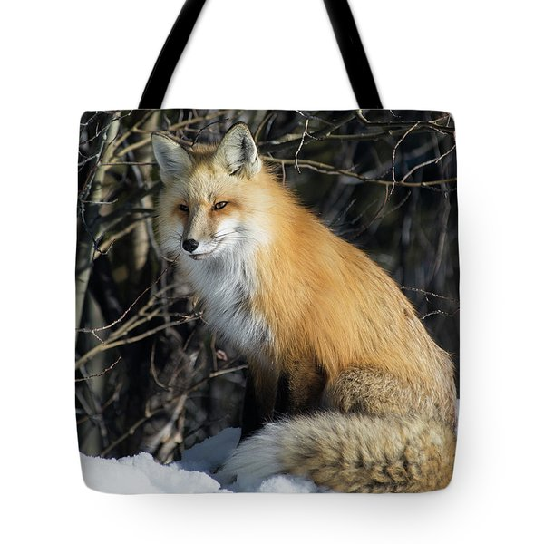 Crossroads With A Red Fox Tote Bag