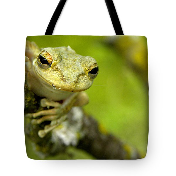 Cuban Tree Frog 000 Tote Bag by Chris Mercer