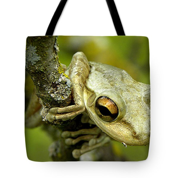 Cuban Tree Frog  Tote Bag by Chris Mercer