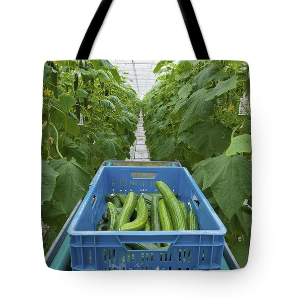 Tote Bag featuring the photograph Cucumbers Harvesting by Hans Engbers