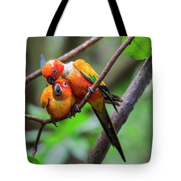 Cuddling Parrots Tote Bag