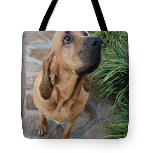 Cujo Looking At A Butterfly Tote Bag by Val Oconnor